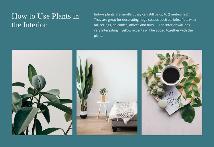 Plants can increase productivity Website Template