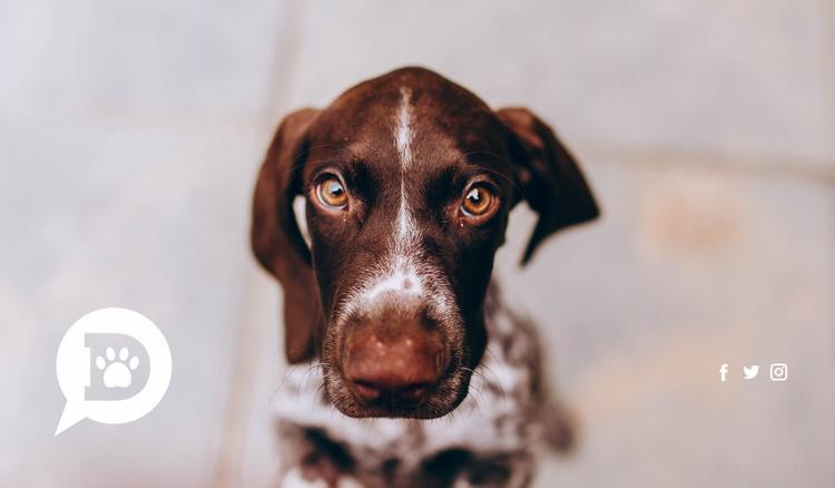 Domestic pets love Website Template