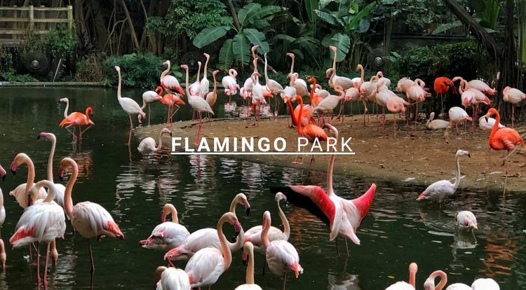 Nature flamingo park  Website Template
