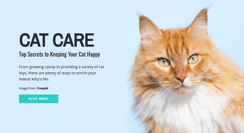 Cat care tips and advice Web Page Design