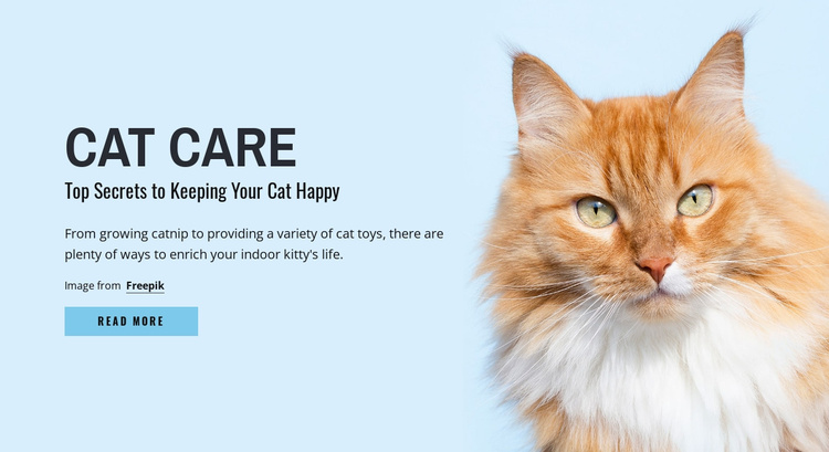 Cat care tips and advice Website Template
