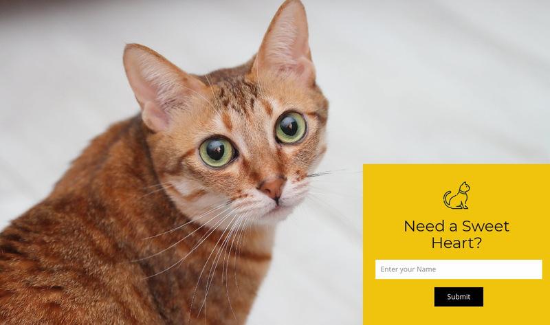 Visit our shelter Web Page Designer