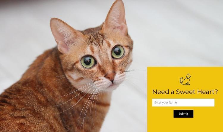 Visit our shelter Website Design