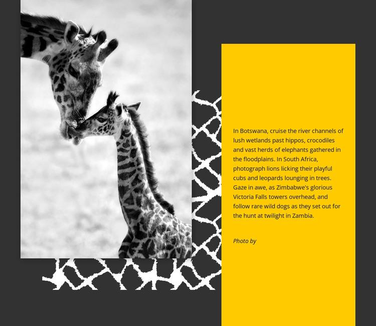 South African giraffe HTML Template