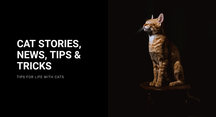 Cat stories and news Website Template