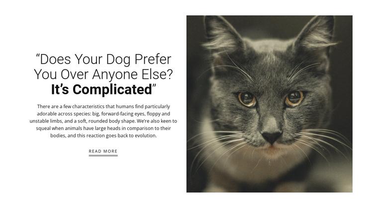 Pet's stories Joomla Template