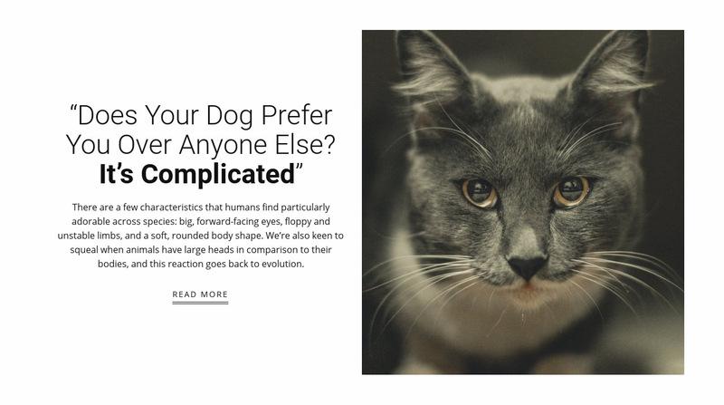 Pet's stories Web Page Designer