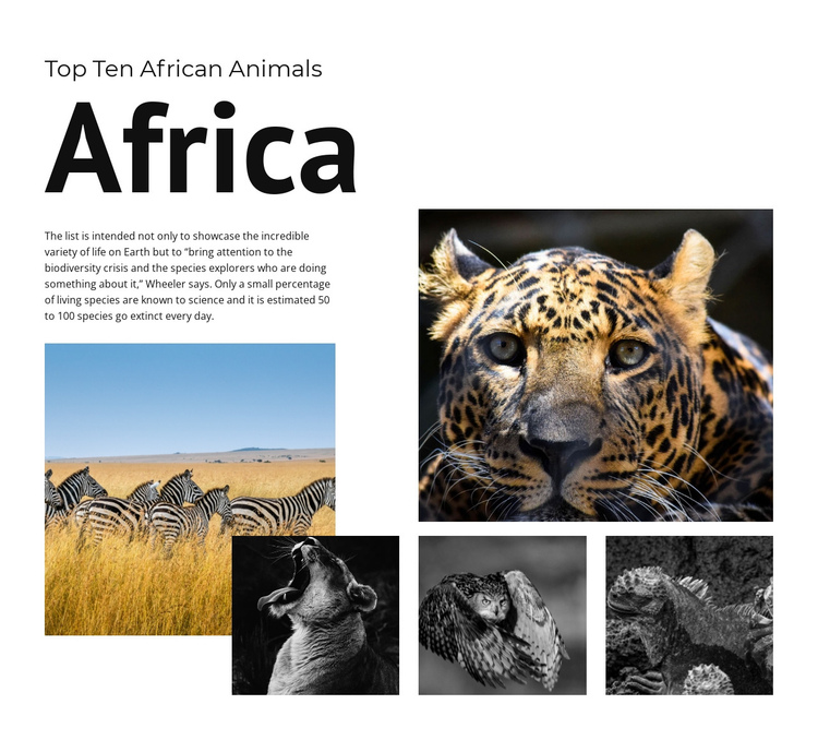 Ten African Animals One Page Template