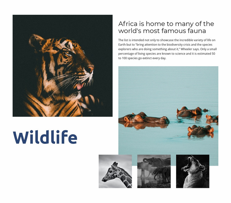 Africa Wildlife WordPress Website Builder