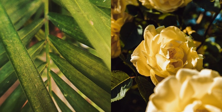 Leaves and flowers Web Page Design