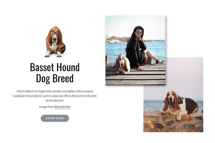 Basset hound dog HTML Template